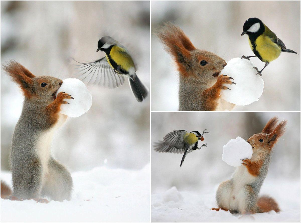 день угощения птиц и белок гиф
