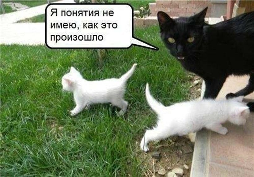 Приколы бюджет, картинки смешные кошки и котята и коты до слез