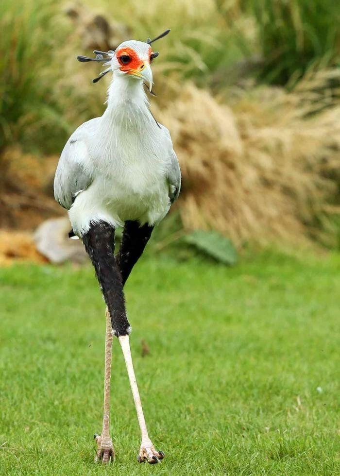 Фото птицы смешное