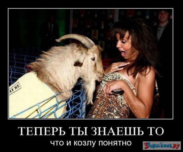 Цитата(Пупсень @ 25.6.2010, 10:45). любовь зла, полюбишь и козла. Прикрепл