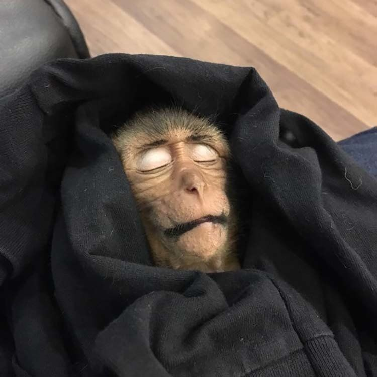 сохранили картинка с тремя обезьянами мем погибшей юлии
