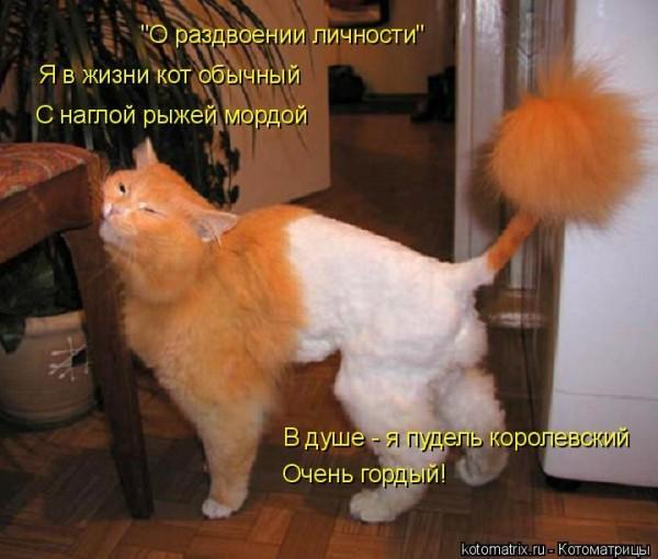 приколы фото про кошек