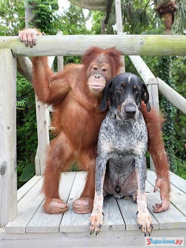 этот фото и картинки обезьяны на собаках доме