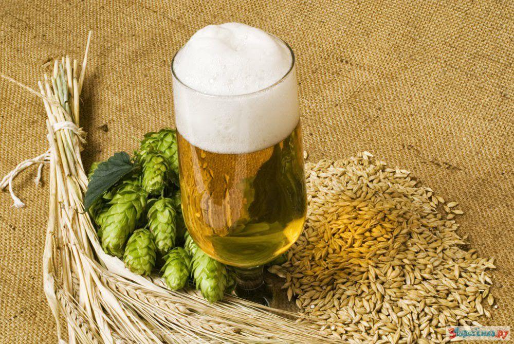 Пиво в домашних условиях из хмеля