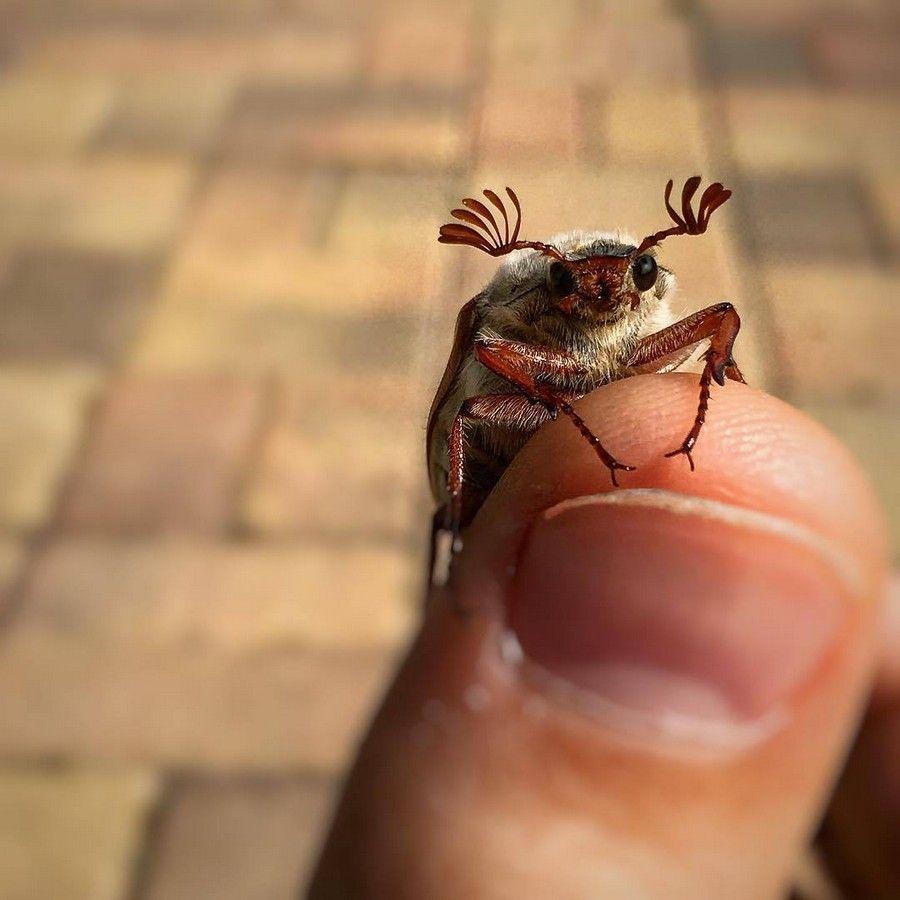 Веселые картинки жуков