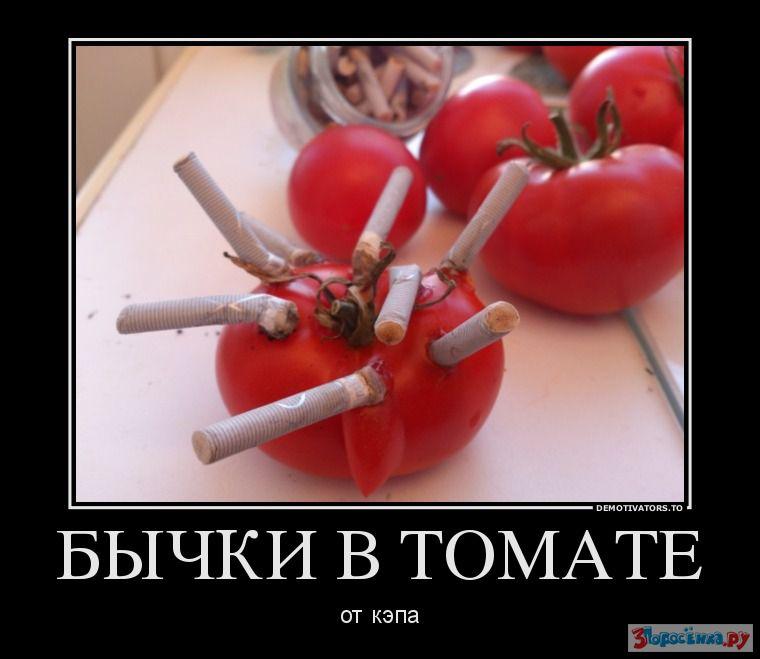 демотиваторы про помидоры
