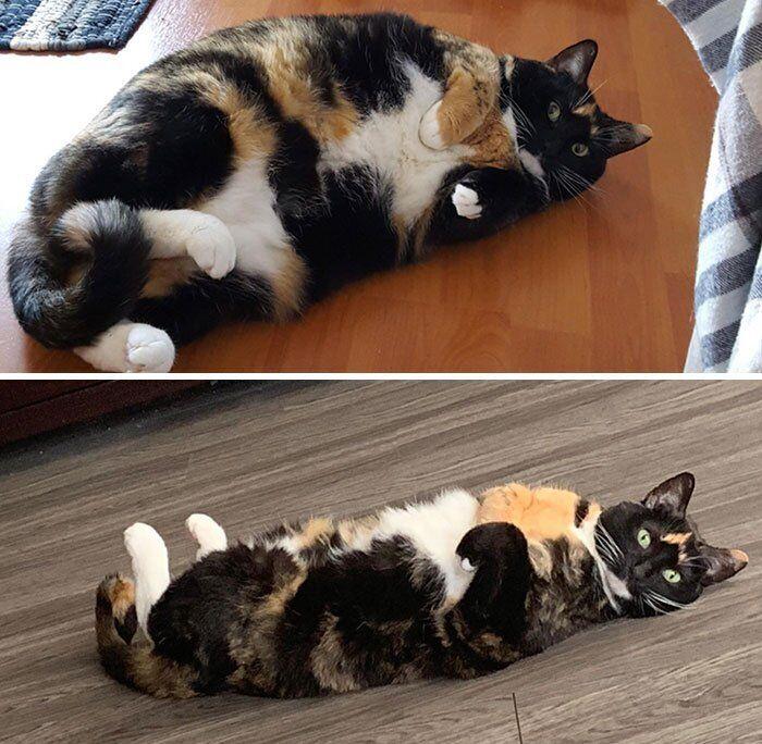 Кошка Перестала Есть И Похудела. Кот не ест и не пьёт: тревожные симптомы, которые должны насторожить