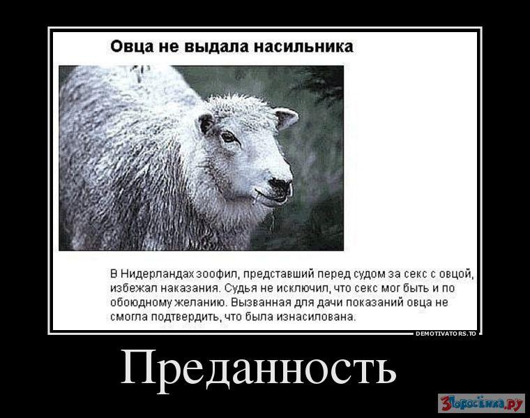 простые демотиваторы про овец правде