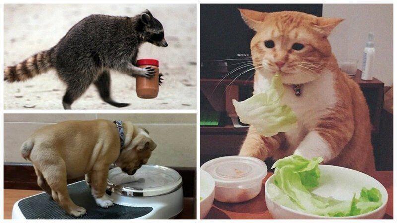 Кот Похудел Но Кушает Хорошо. Почему кошка худеет без видимых причин
