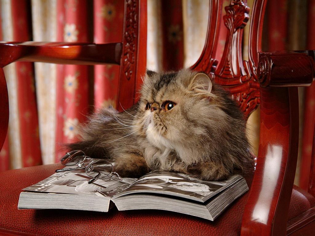 Котенок с книгой без смс