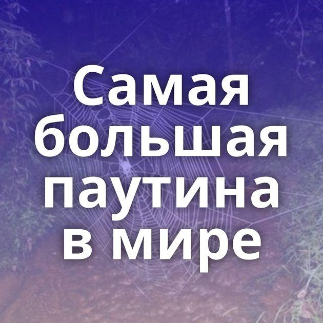 Самая большая паутина в мире