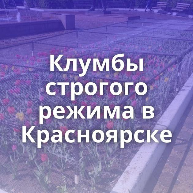 Клумбы строгого режима в Красноярске