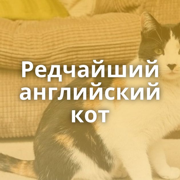 Редчайший английский кот