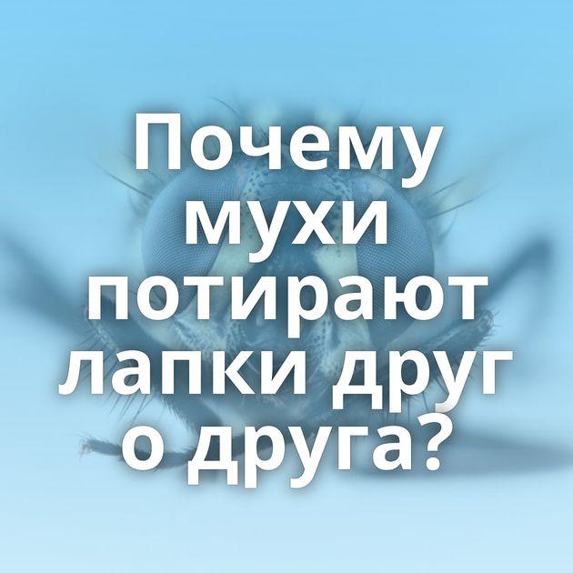 Почему мухи потирают лапки друг одруга?