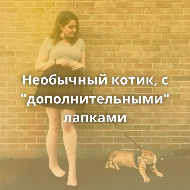 Необычный котик, с
