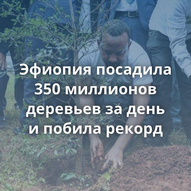 Эфиопия посадила 350миллионов деревьев задень ипобила рекорд