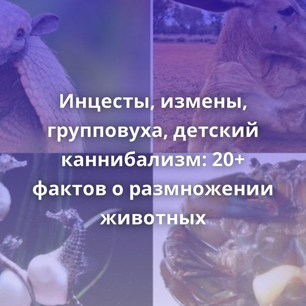 Инцесты, измены, групповуха, детский каннибализм: 20+ фактов оразмножении животных