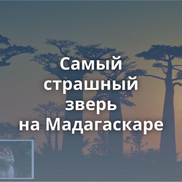 Самый страшный зверь наМадагаскаре