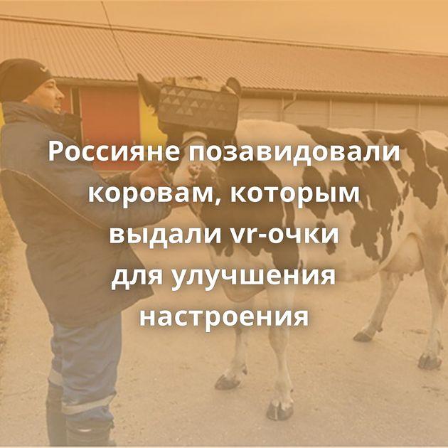 Россияне позавидовали коровам, которым выдали vr-очки дляулучшения настроения