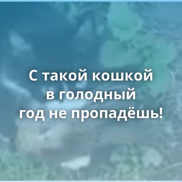 Стакой кошкой вголодный годнепропадёшь!