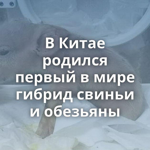 ВКитае родился первый вмире гибрид свиньи иобезьяны