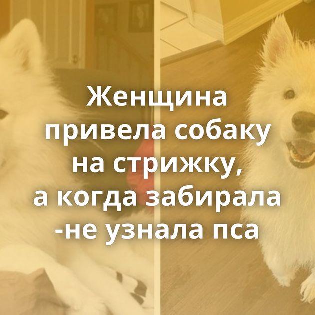 Женщина привела собаку настрижку, акогда забирала -неузнала пса
