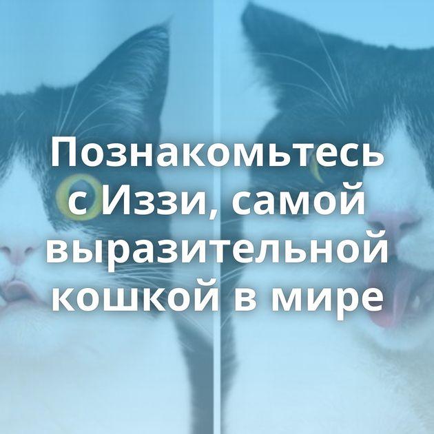 Познакомьтесь сИззи, самой выразительной кошкой вмире