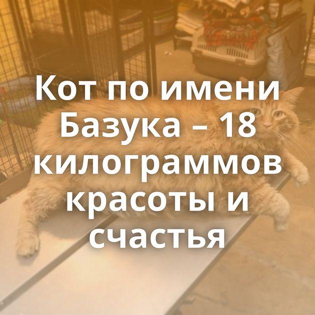 Кот по имени Базука – 18 килограммов красоты и счастья