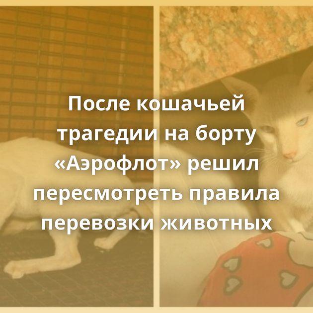 После кошачьей трагедии наборту «Аэрофлот» решил пересмотреть правила перевозки животных