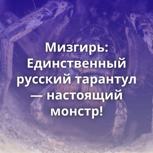 Мизгирь: Единственный русский тарантул — настоящий монстр!