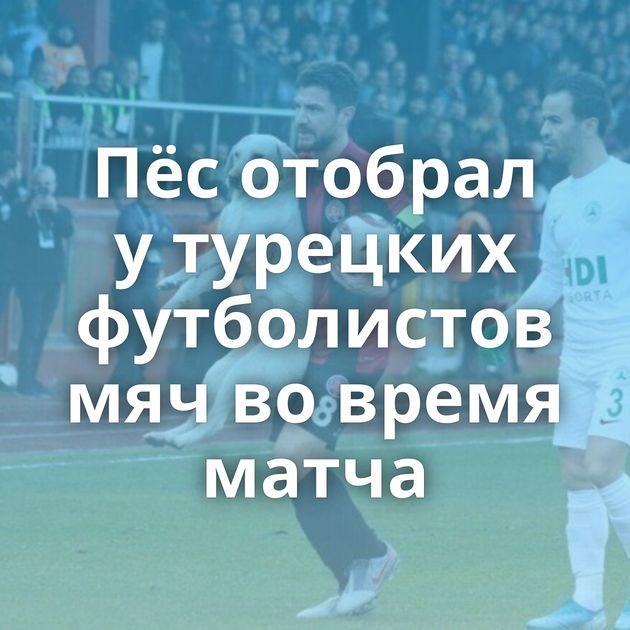 Пёсотобрал утурецких футболистов мячвовремя матча