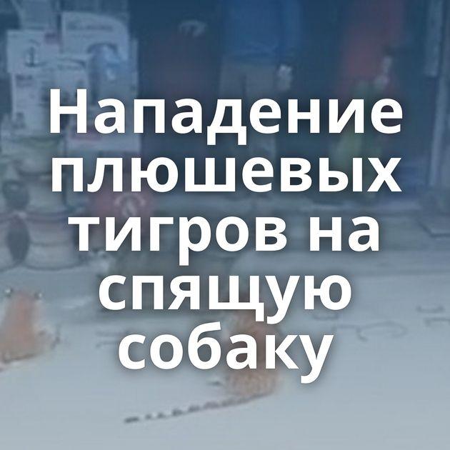 Нападение плюшевых тигров на спящую собаку