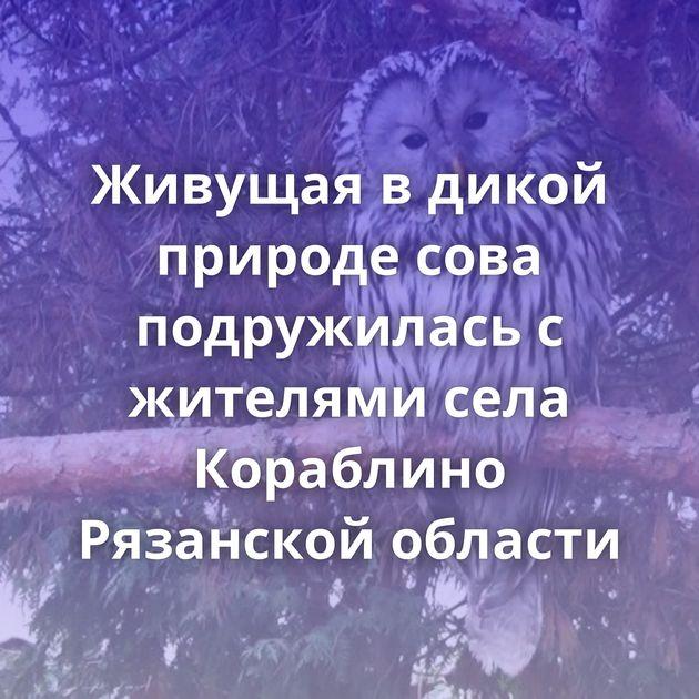 Живущая в дикой природе сова подружилась с жителями села Кораблино Рязанской области