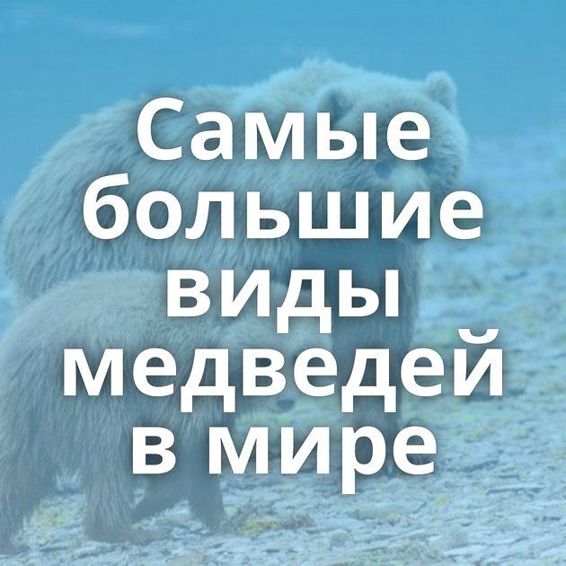 Самые большие виды медведей в мире