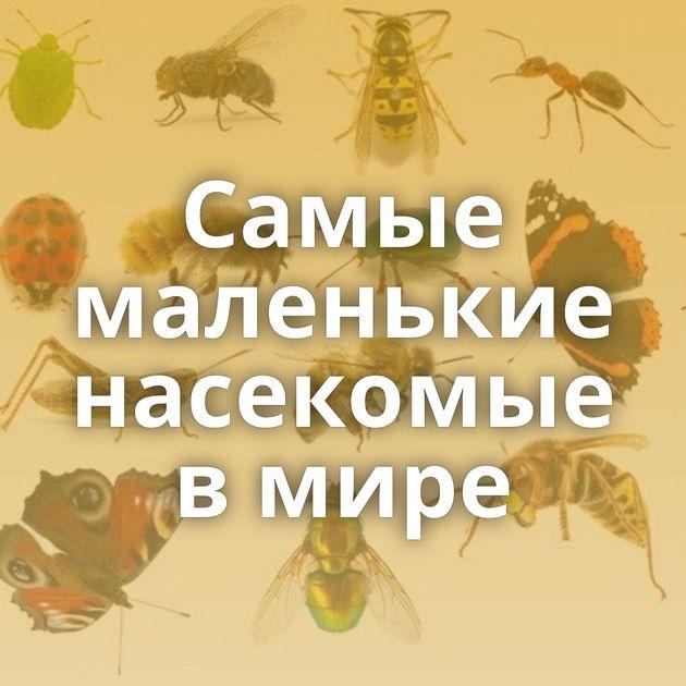 Самые маленькие насекомые в мире