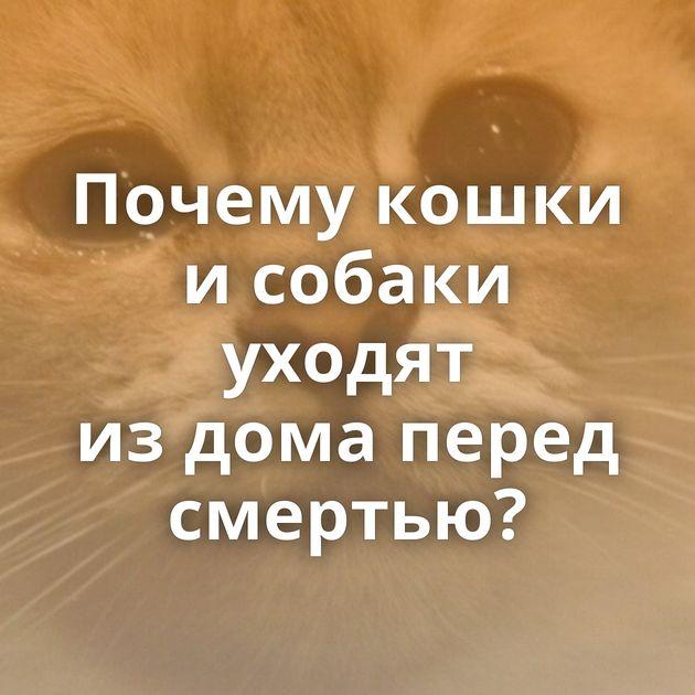 Почему кошки исобаки уходят издома перед смертью?