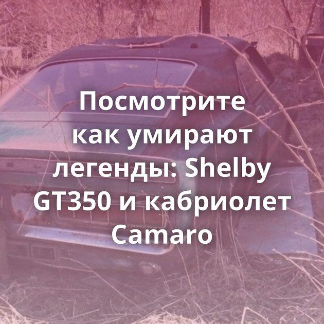 Посмотрите какумирают легенды: Shelby GT350 икабриолет Camaro