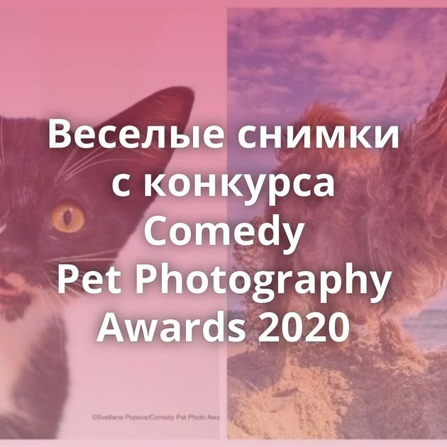 Веселые снимки с конкурса Comedy Pet Photography Awards 2020