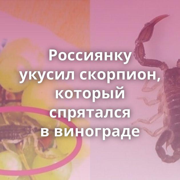 Россиянку укусил скорпион, который спрятался ввинограде