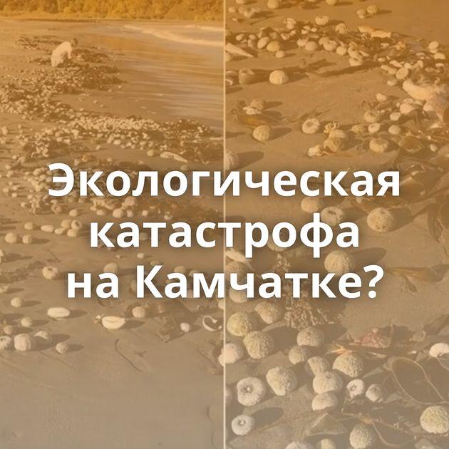 Экологическая катастрофа наКамчатке?