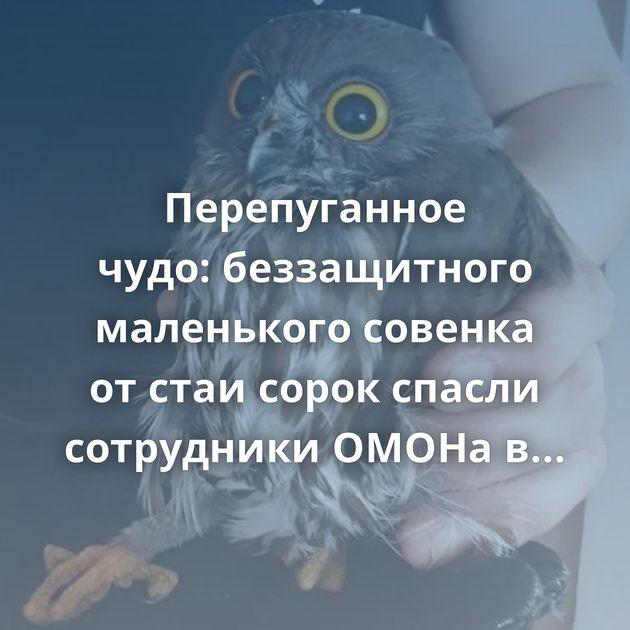 Перепуганное чудо:беззащитного маленького совенка отстаи сорок спасли сотрудники ОМОНа вХабаровске