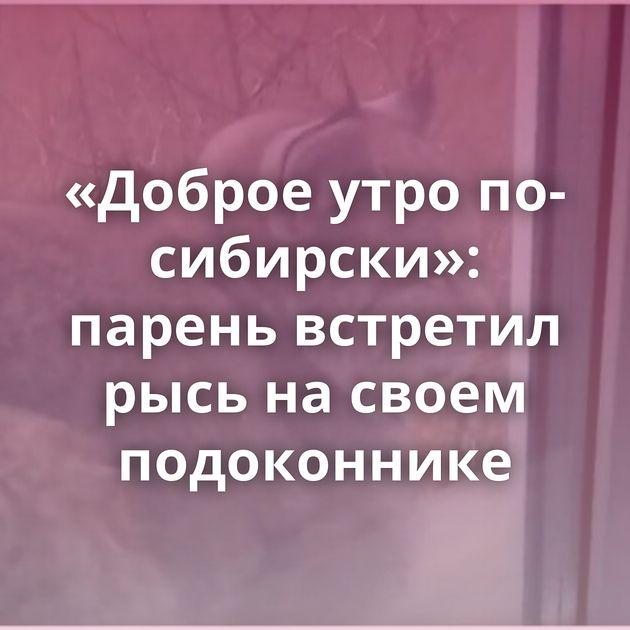 «Доброе утро по-сибирски»: парень встретил рысь насвоем подоконнике