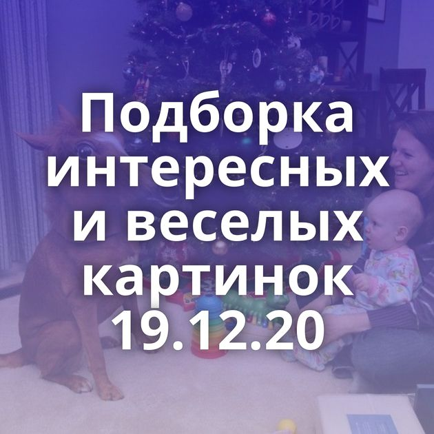Подборка интересных и веселых картинок 19.12.20