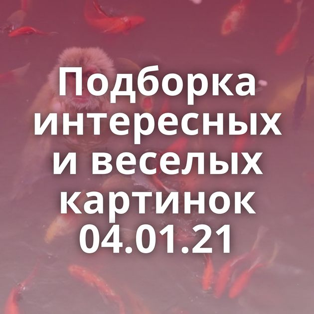 Подборка интересных и веселых картинок 04.01.21