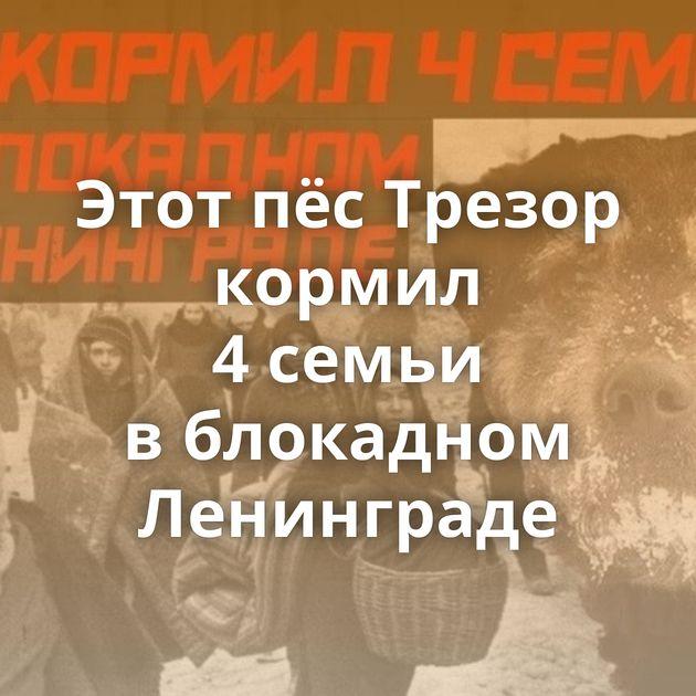 Этот пёсТрезор кормил 4семьи вблокадном Ленинграде