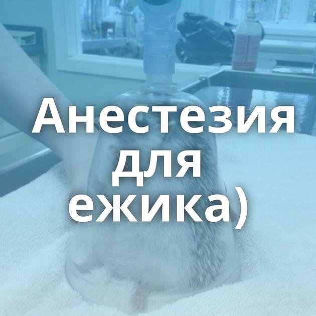 Анестезия для ежика)