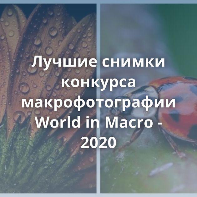 Лучшие снимки конкурса макрофотографии World inMacro - 2020