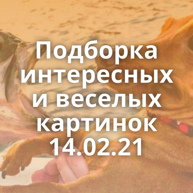 Подборка интересных и веселых картинок 14.02.21