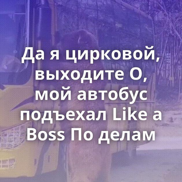 Да я цирковой, выходите О, мой автобус подъехал Like a Boss По делам