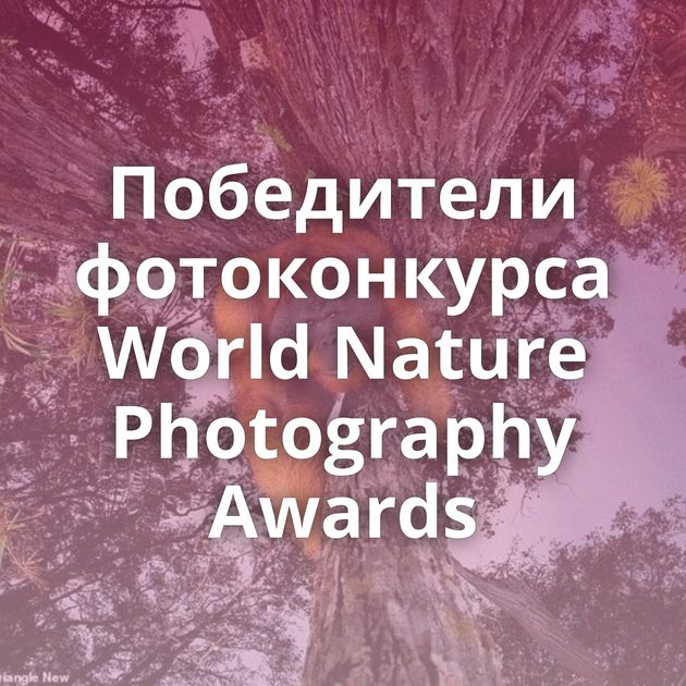 Победители фотоконкурса World Nature Photography Awards